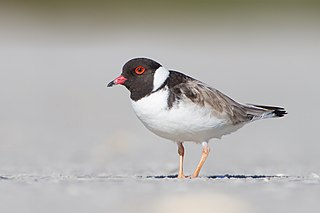 Plover,  Wisconsin, United States