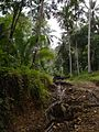 Through the Jungle - panoramio.jpg