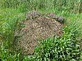Thymus pulegioides subsp. pulegioides sl5.jpg