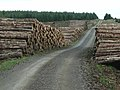 Timber stacks, Wark Forest - geograph.org.uk - 244689.jpg
