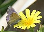 Tiny Butterfly (31133059391).jpg