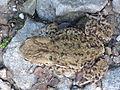 Toad-5-Top.jpg