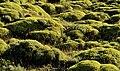 Torres del Paine, flora 23.jpg