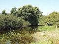 Towan Pond - geograph.org.uk - 50596.jpg