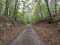 Track in the Hambach forest 13.jpg