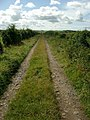 Track to South Auchenbrain - geograph.org.uk - 225125.jpg