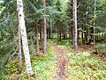 Trail in a forest.JPG