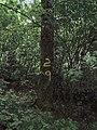 Tree 29, Damflask Reservoir, near Low Bradfield - geograph.org.uk - 1607869.jpg