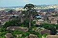 Tree on Olumo Rock in Abeokuta, Ogun State-Nigeria.jpg