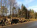 Trees along a road in Gåseberg.jpg