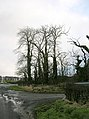 Trees at Crooks - geograph.org.uk - 325047.jpg