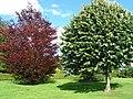 Trees in Churchill Gardens - geograph.org.uk - 1420437.jpg