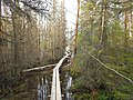 Tysjöarna-Jämtland-Sweden 07.jpg