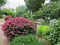 U.S. Botanic Garden in July (23167814864).jpg