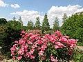 U.S. Botanic Garden in May (23409540669).jpg