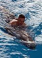 US Navy 041216-N-8774S-083 A Sailor assigned to the aircraft carrier USS Harry S. Truman (CVN 75), swims with a dolphin during a port visit to Bahrain.jpg