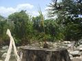 Un tronco con una planta.PNG