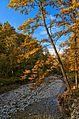 Una quercia con poche speranze - panoramio.jpg