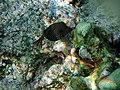 Underwater rainbow 3.jpg