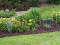 Unknown Daylilies on West Slope S4.jpg