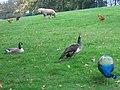 Urban farm, Maryon Wilson Park - geograph.org.uk - 262010.jpg