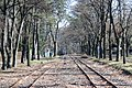 Valley side junction of Matrafured Station of the Matravasut narrow gauge railway (33255616033).jpg