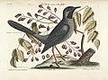 Verzameling van uitlandsche en zeldzaame vogelen (Tab. LX) (7894209224).jpg