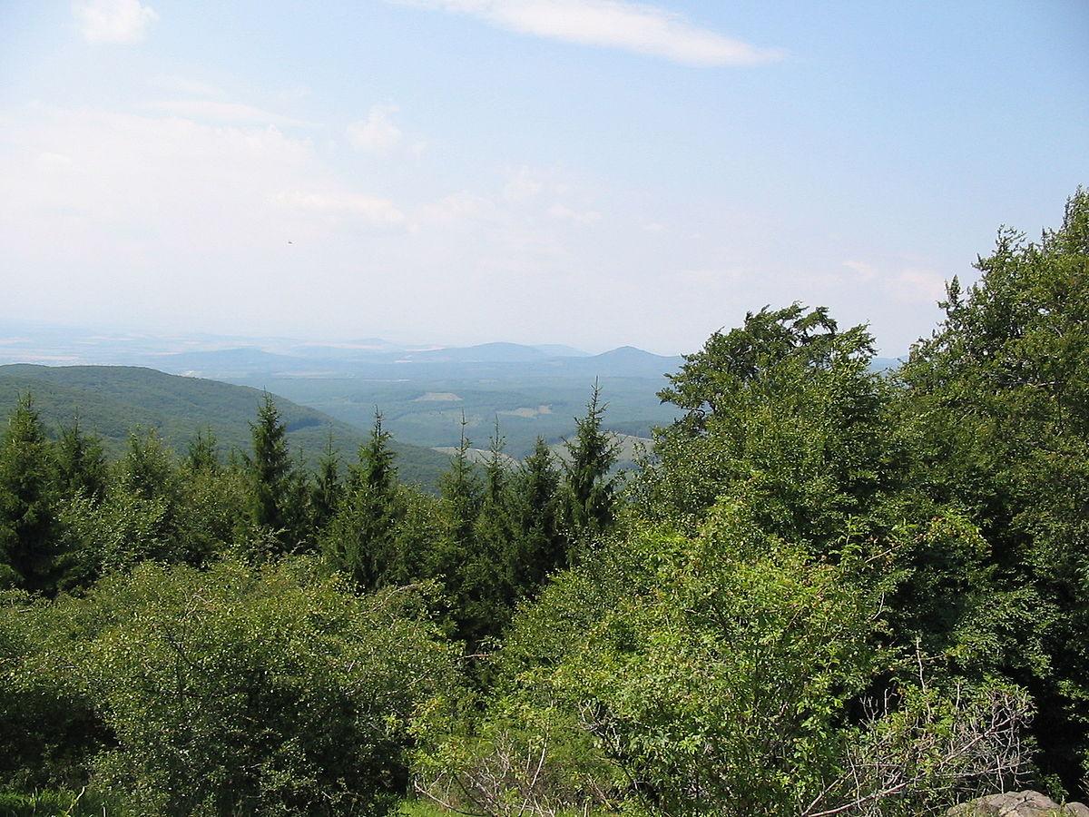 Bosque mixto - Wikipedia, la enciclopedia libre