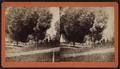 View of a cemetery. Poughkeepsie, N.Y, by Slee Bros..png