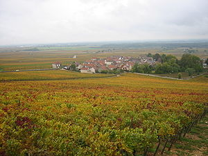 Vignoble Morey Saint Denis 2.JPG