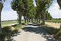 Vignoble de Salles-d'Aude.jpg