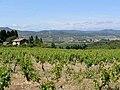Vignoble et Mont Alaric.jpg