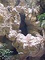 Villa gregoriana grotta di nettuno 1 990820.jpg