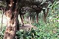 Villa la quiete, giardino, 'stanza' verde 02.JPG
