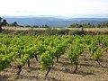 Vineyard (1070842981).jpg
