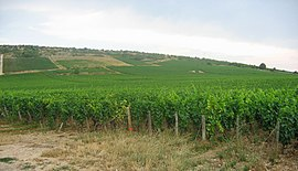 Vineyards of Nuits-Saint-Georges