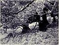 Virgin Forest in the Interior, MON 1909.jpg