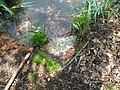Vyžlovský rybník (029).jpg