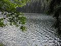 Vylet k Cernemu jezeru Sumava - 9.srpna 2010 183.JPG