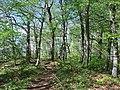 Waldweg am Albtrauf bei Beuren (1).jpg