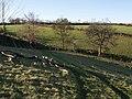 Walk at Tordown Farm - geograph.org.uk - 621251.jpg