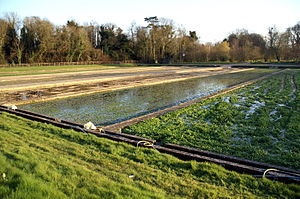 Watercress - Watercress beds in Warnford, Hampshire, England.