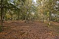 Warwickslade Cutting, filled in - geograph.org.uk - 1565994.jpg