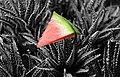 Wassermelone + Kaktus (27735532916).jpg