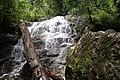 Water course, Afi Mountain Wildlife Sanctuary, Cross River State.jpg