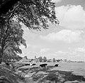Weiland met koeien op de achtergrond een dorp, Bestanddeelnr 191-0652.jpg