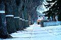 West End Trees, Winnipeg Manitoba Canada.jpg