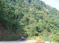 Western Ghats Vegetation - View en route Kottiyoor to Mananthavady17.jpg