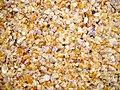 Whole Lotta Shells - Goa, India - Flickr - gregor y.jpg