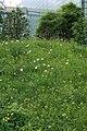 Wildlife-Garden3.JPG
